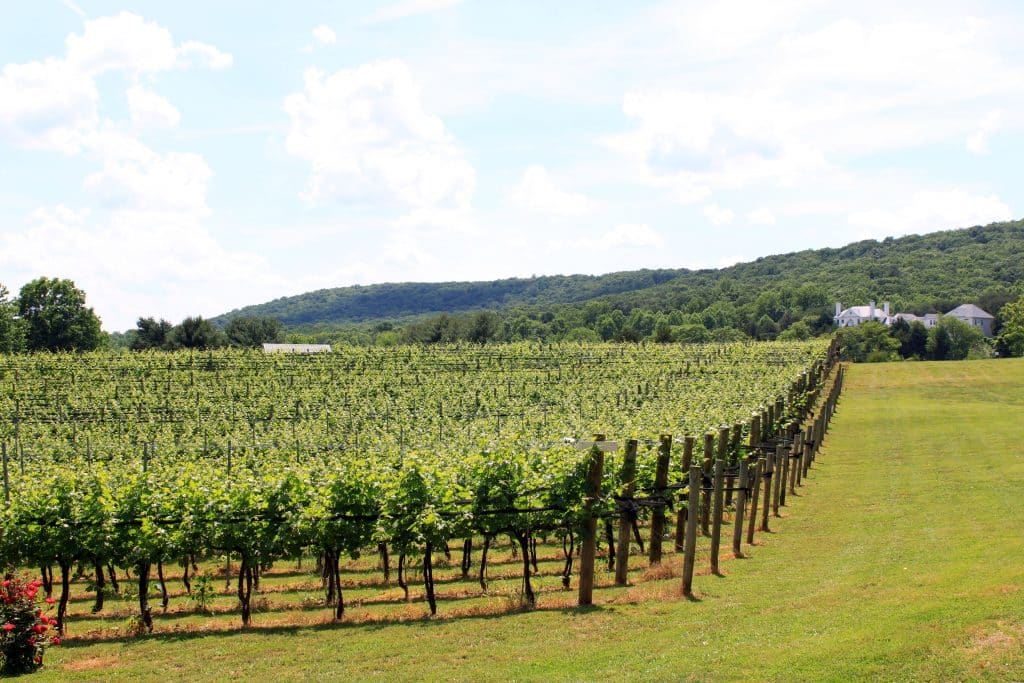 Winery at La Grange - Vineyard