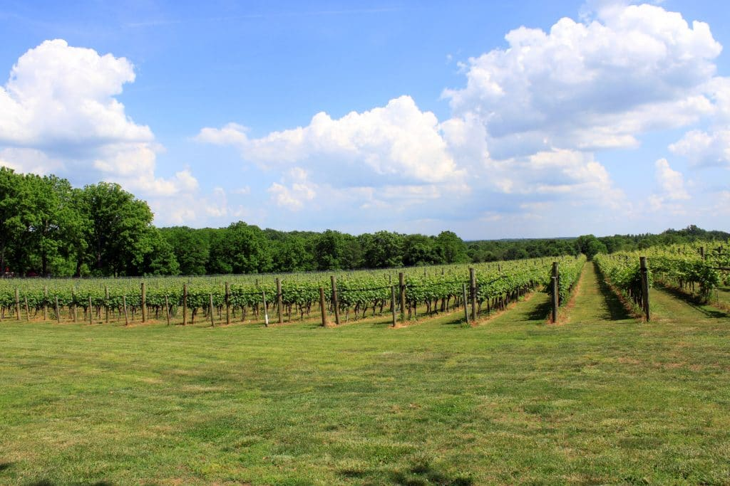 Winery at La Grange - Vineyard Upfield