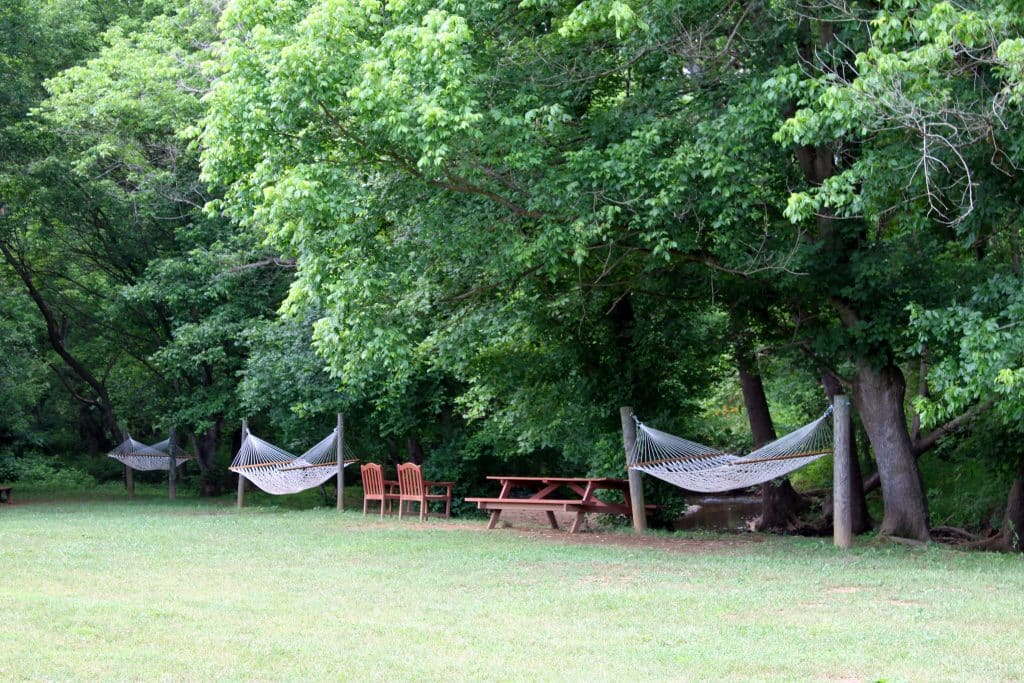 Three Fox Vineyards - Hammocks by Creek