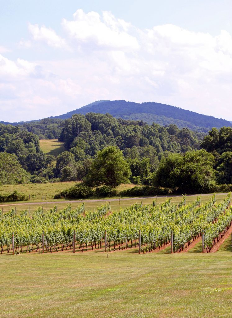 Three Fox Vineyards - Vines and Cobbler Mountain