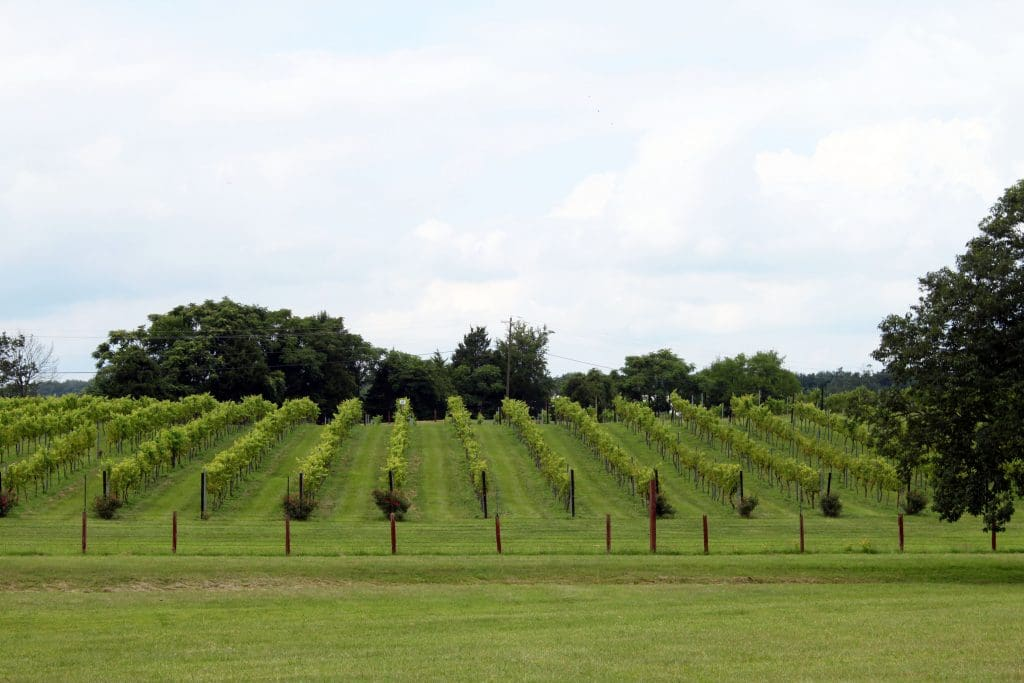 Molon Lave Vineyards - Lane to Winery