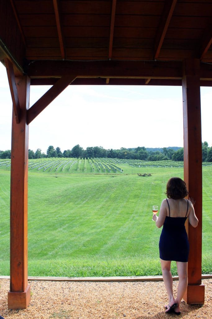 Miracle Valley Vineyard - View from Pavilion