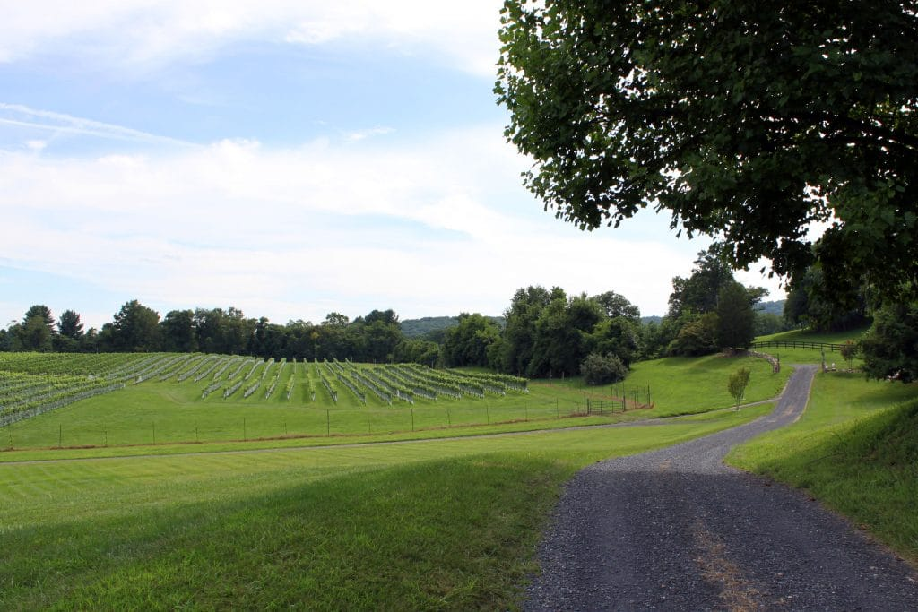 Miracle Valley Vineyard - Winery Lane
