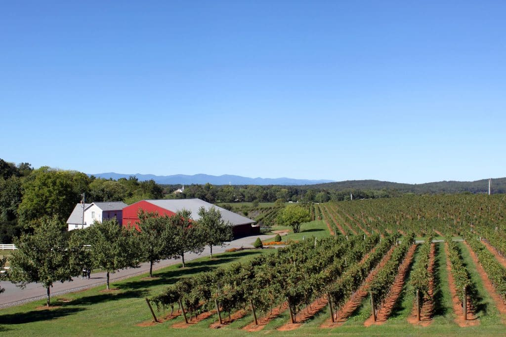 Barboursville Vineyards - Vines