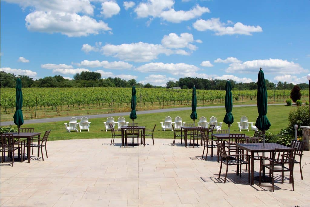 Narmada Winery - Rear Vineyard Patio